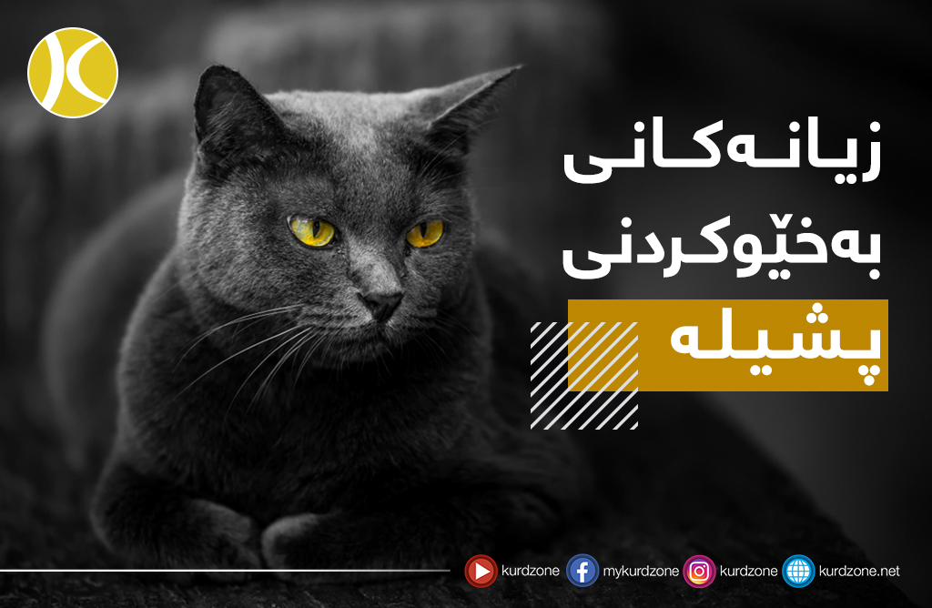 <a style='color:#fff' href='Topic_4959_10'>زیانەکانی بەخێوکردنی پشیلە ...</a>